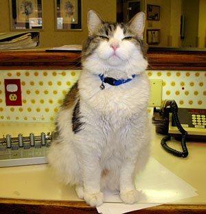 gato-previsor.jpg