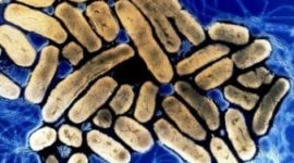Secuencian genoma de bacteria con capacidad anticancerígena