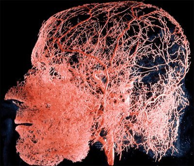 tumores-enc.jpg