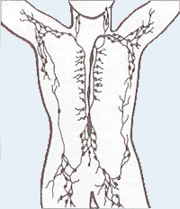 180px-lymphatic_system.png