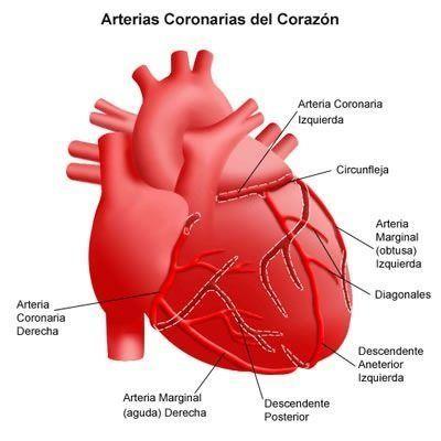 músculo cardiaco
