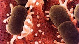 El organismo podría controlar las bacterias que lo afectan