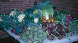 La dieta, fundamental para la prevención de Hipoglucemia y Ataques de Pánico