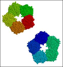 C-reactive_protein