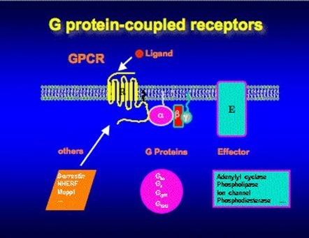 receptores de proteína G,
