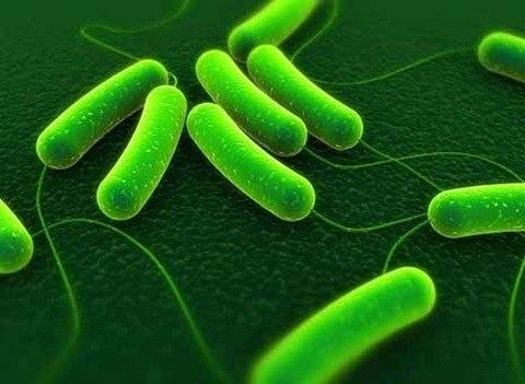 El contacto precoz con microbios mejora las defensas