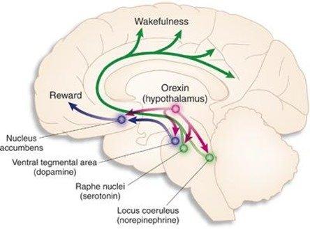 Nueva pastilla para dormir sin efectos secundarios |Dora-22