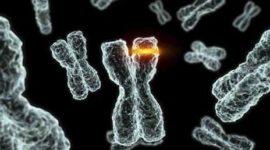 Detectar 552 enfermedades hereditarias | nuevo test genético