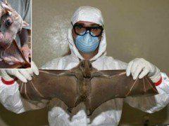 Ébola, ¿por qué aún no tiene cura?