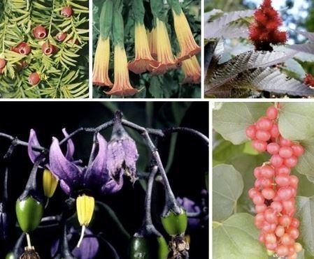 plantas-venenosa.jpg