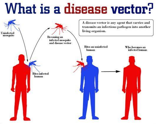 enfermedades-trasmitidas-por-vectores2