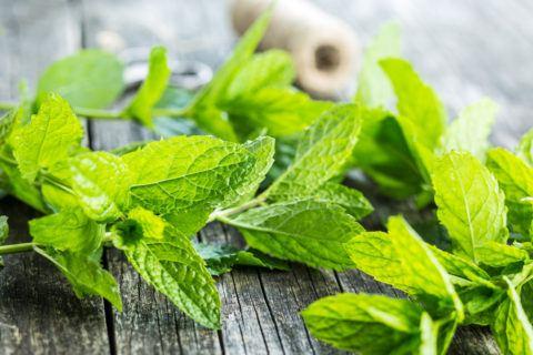 Mejores remedios naturales contra gastritis infusion menta