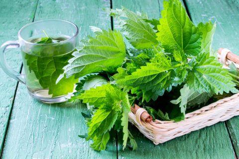 Mejores remedios naturales contra gastritis infusion ortiga